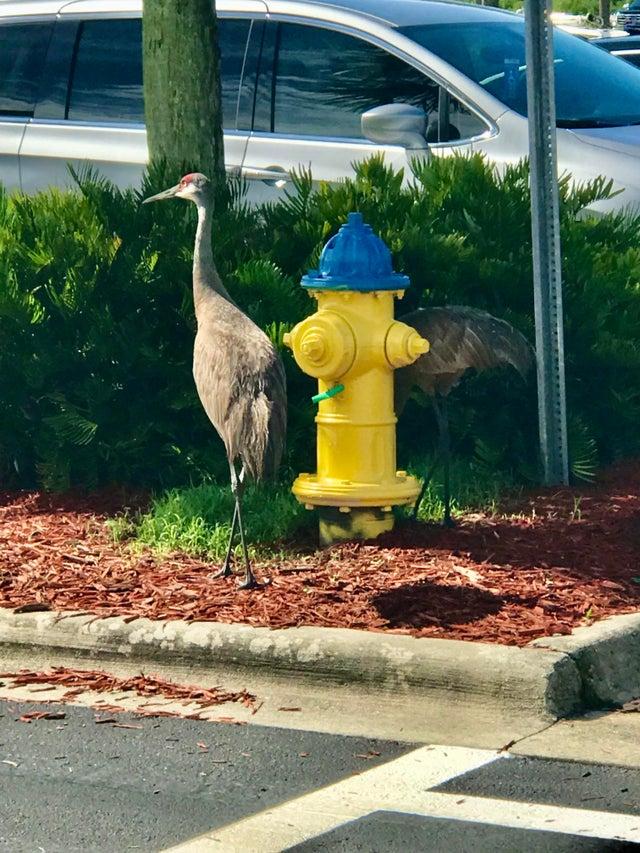 crane walmart